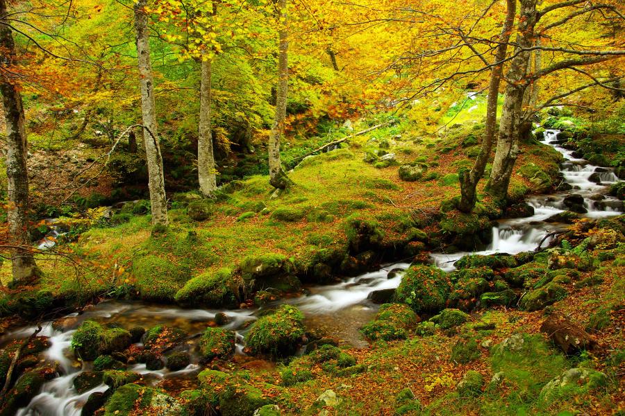Bosque Redes 2