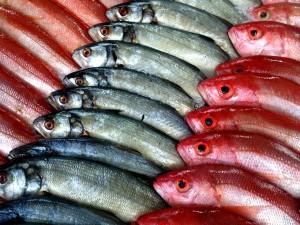 Pescados asturias