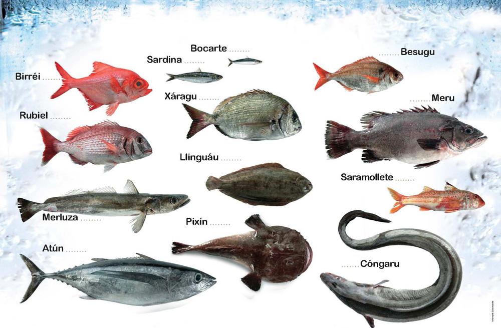 Pescados de Asturias